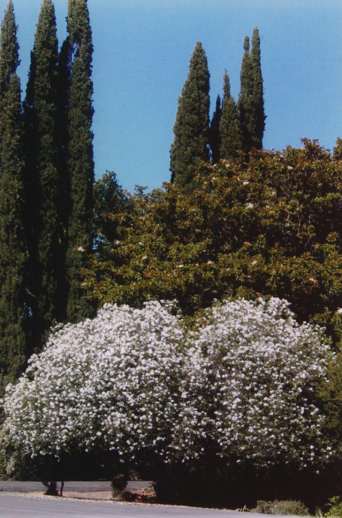 1 - Vedanta Society of Sacramento - Garden of Saints - Entrance - Image 1