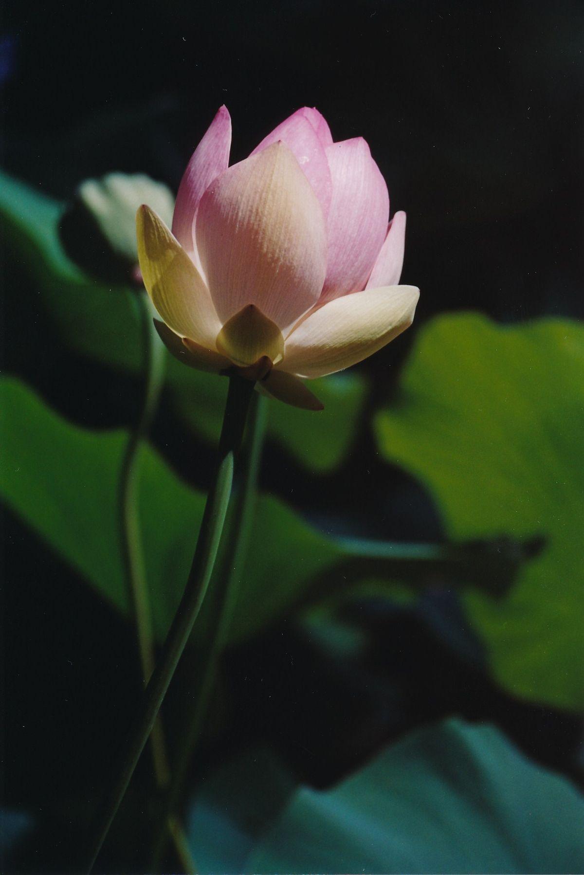 14 - Vedanta Society of Sacramento - Garden of Saints - Flowers in the Gardens - Image 1