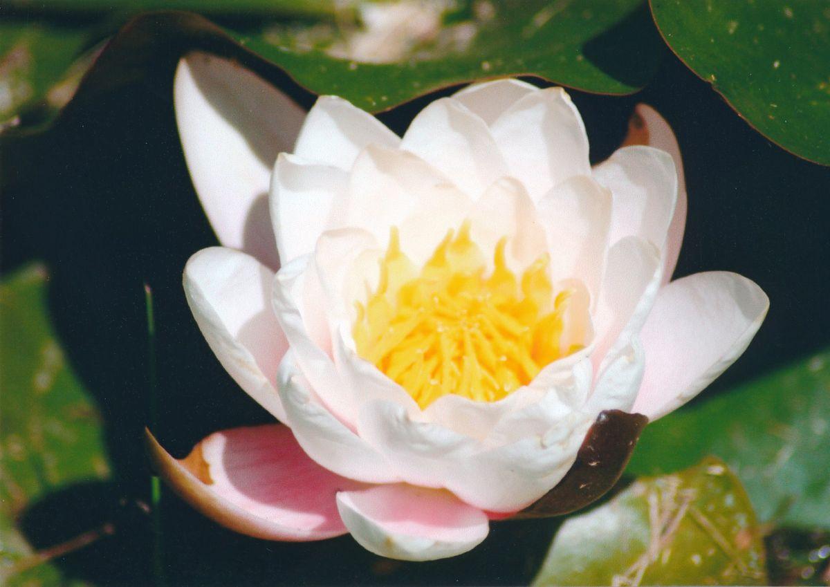 14 - Vedanta Society of Sacramento - Garden of Saints - Flowers in the Gardens - Image 7
