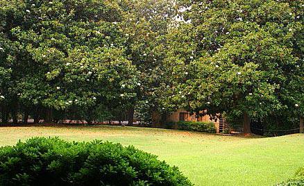 4 - Vedanta Sacramento Lawn