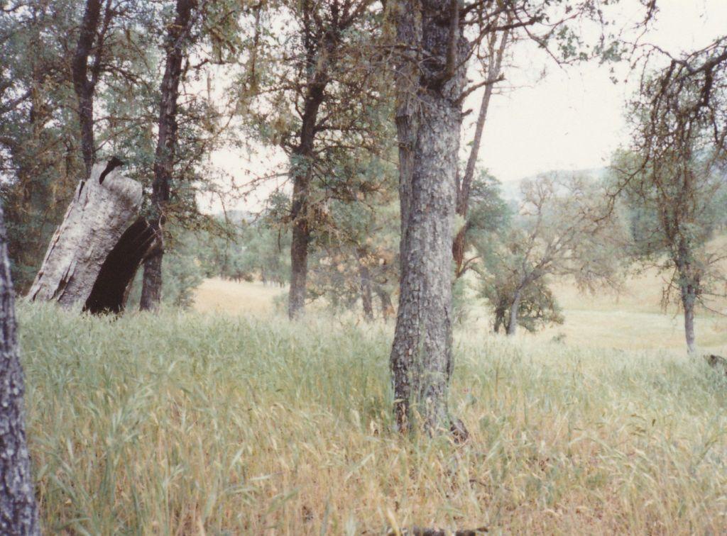 1989-05-06 Shanti Ashrama Meadow