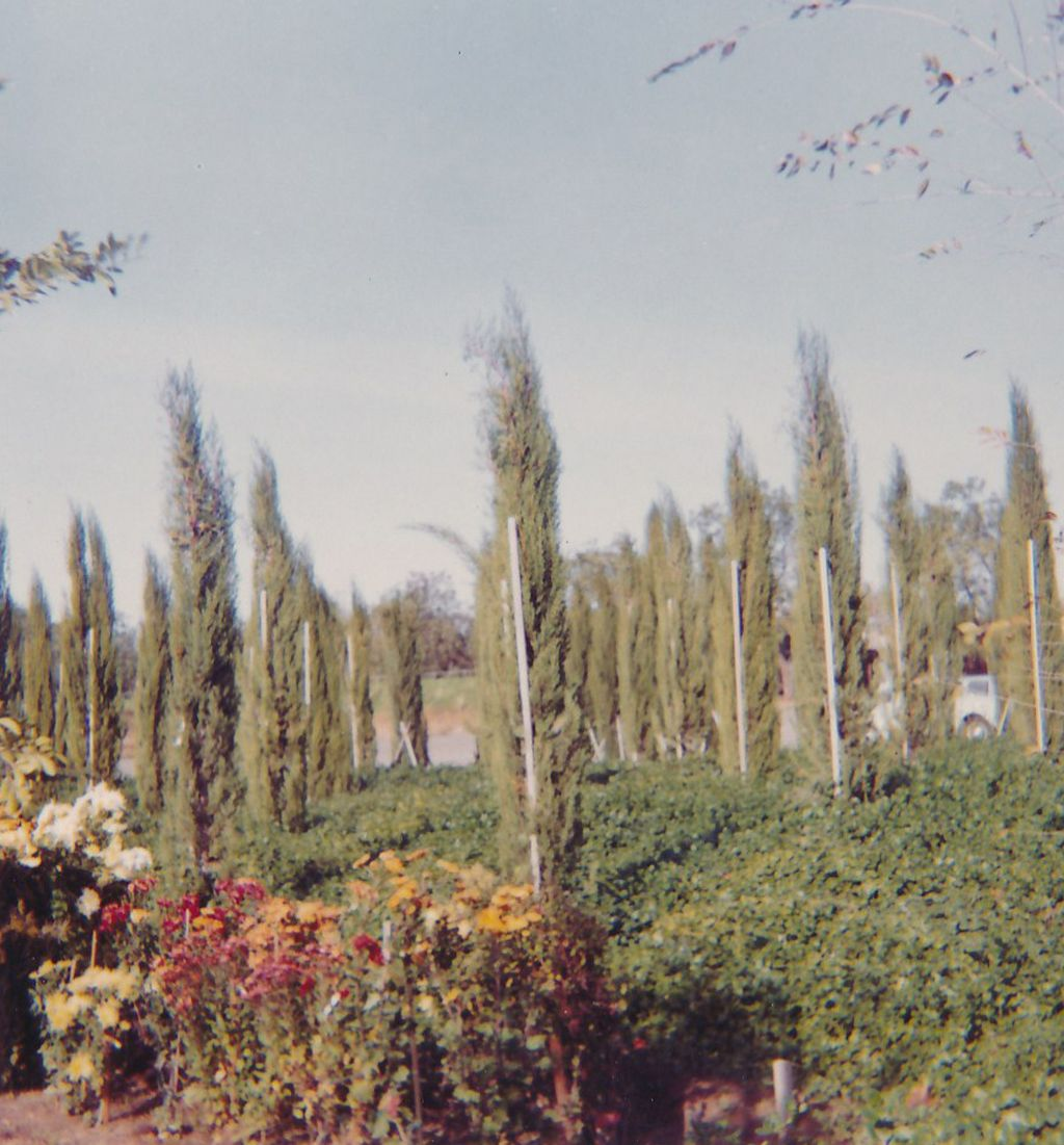 Sacramento flower garden